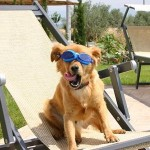 Agriturismi pet friendly, in crescita