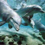 Un magico viaggio nel mediterraneo alla ricerca dei Cetacei