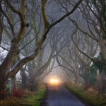 "Realtà o illusione? Scopriamo ""the dark hedges"""